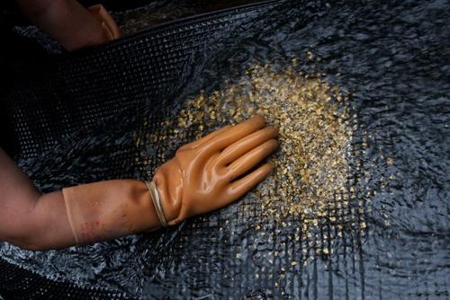 процедура добычи золота
